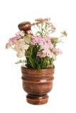 Achillea millefolium Lizenzfreies Stockbild