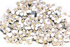 Achillea millefolium Stockbilder