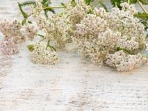 Achillea millefolium flowers heap. On the white rough painted background stock image