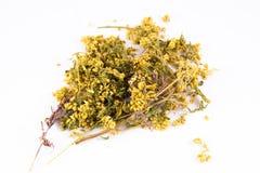Achillea-millefolium im weißen Hintergrund Lizenzfreie Stockfotos
