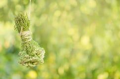Achillea-millefolium oder Anlage der Schafgarbe Millefolii-Kraut auf dem Seil Lizenzfreie Stockfotos