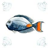 Achilles blaszecznica Akwareli tropikalna morska ryba Malować nakreślenie royalty ilustracja