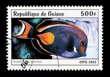 Achilles Tang (Acanthurus Achilleus), Fische serie, circa 1997 Lizenzfreie Stockfotografie