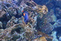 Achilles tang Stock Photography
