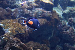 Achilles tang. Floating in water Stock Images