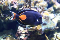 Achilles tang. Floating in water Royalty Free Stock Photo