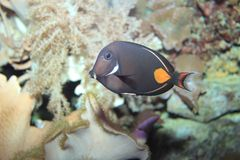 Achilles tang. Floating in water Royalty Free Stock Image