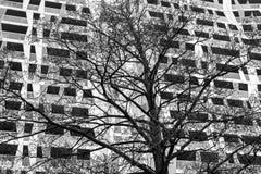 Achitectural Building Tree Rotterdam BW Stock Image