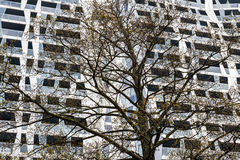Achitectural Building Tree Rotterdam Stock Photography