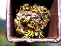 Achse im Nest Lizenzfreie Stockbilder