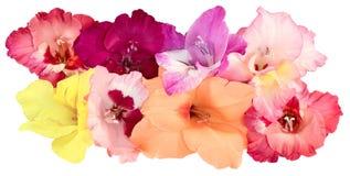 Acht Blumenknospen von Gladiolen Stockfotos