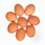 Acht braune Eier Stockfotografie