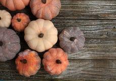 Acht diffent Farben der rustikalen Kürbise auf einem rustikalen hölzernen Hintergrund lizenzfreie stockfotografie