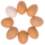 Acht Eier im Kreis Ein Eiweiß Stockbilder
