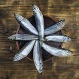 Acht Fischheringe in einem Lehm rollen auf einem Holztisch Die Ansicht von der Oberseite Stockfotografie