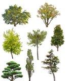 Acht geïsoleerde bomeninzameling Royalty-vrije Stock Afbeeldingen
