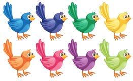Acht kleurrijke vogels royalty-vrije illustratie