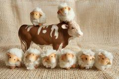 Acht nette Schafe und eine Kuh, die zusammen im Bauernhof spielt Stockbild