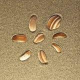 Acht Oberteile im Sand Stockbilder