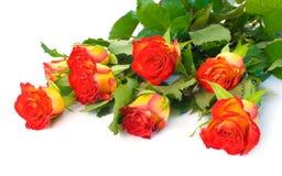 Acht rot und gelbe Rosebuds Stockbild