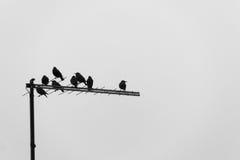 Acht Vögel über einer Fernsehantenne an einem bewölkten Tag Lizenzfreies Stockbild