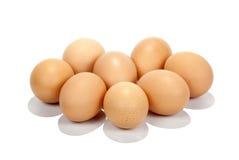 Acht vers-Gelegde Bruine Eieren op Witte Achtergrond Royalty-vrije Stock Afbeeldingen