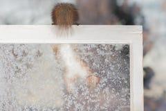 Achter bevroren venster Stock Afbeeldingen