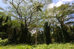 Achter blauwe hemel over regenwoud Stock Foto