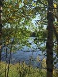 Achter bomen stock afbeeldingen