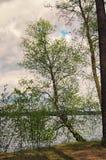 Achter de bomen is een schilderachtig meer Pisochneozero Volyngebied ukraine Stock Fotografie