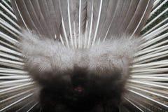 Achter het pauwwiel stock fotografie