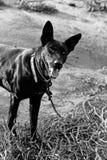 Achter hond Royalty-vrije Stock Afbeeldingen