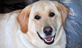Achter mening van een puppyhond op een grijze achtergrond stock fotografie