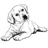 Achter mening van een puppyhond op een grijze achtergrond Royalty-vrije Stock Afbeeldingen