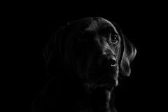 Achter mening van een puppyhond op een grijze achtergrond Royalty-vrije Stock Foto