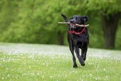 Achter mening van een puppyhond op een grijze achtergrond royalty-vrije stock fotografie