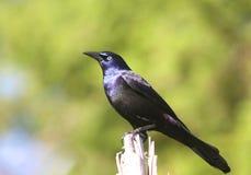 Achter Vogel die op een Logboek wordt neergestreken Stock Foto