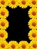 Achtergrond 3 van bloemen Stock Afbeeldingen