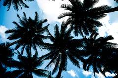Achtergrond, aard, boom, de textuur van de silhouetkokospalm voor bedelaars stock foto's