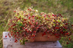 Achtergrond Aardbeien op een houten benc Stock Afbeelding