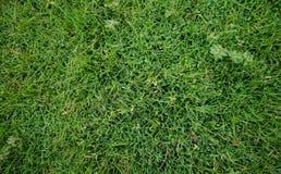 Achtergrond, Achtergrond, gras Royalty-vrije Stock Afbeeldingen