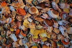 Achtergrond als cocktail van overzeese shells Royalty-vrije Stock Fotografie