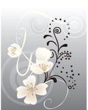 Achtergrond bloemen Stock Foto's