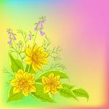 Achtergrond, bloemennarcissen Stock Afbeeldingen