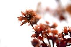 Achtergrond Bruine zaden in de sneeuw Stock Fotografie