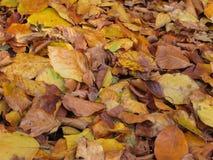 Achtergrond de herfstbladeren Royalty-vrije Stock Foto