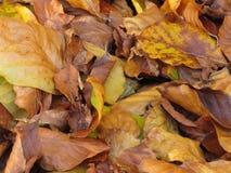 Achtergrond de herfstbladeren Stock Afbeelding