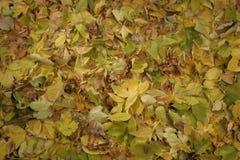 Achtergrond de herfstbladeren Royalty-vrije Stock Foto's