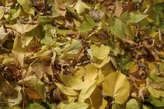 Achtergrond de herfstbladeren Royalty-vrije Stock Afbeelding