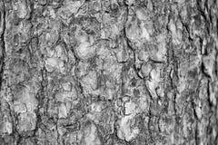 Achtergrond, de schors van de textuurpijnboom stock afbeelding